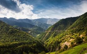 Обои пейзаж, лес, грузия, забор, обои, деревья, природа