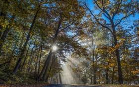 Картинка дорога, лес, лучи, деревья