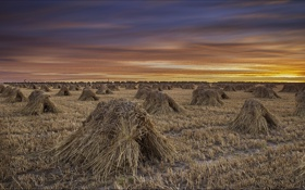 Картинка поле, небо, облака, закат, природа, снопы