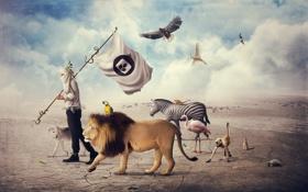 Картинка животные, птицы, человек