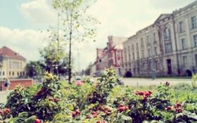 Обои здания, деревья, лето, куст, улица, ягоды