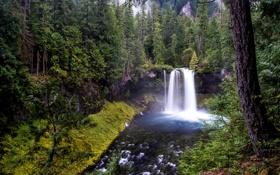 Обои лес, деревья, ручей, водопад