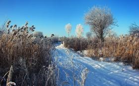 Картинка зима, снег, природа, дерево, камыш