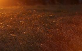 Обои трава, солнце, макро, свет, закат
