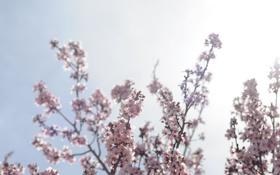 Обои весна, ветки, небо, фото, цветение, обои, природа