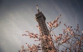 Картинка небо, цветы, природа, город, дерево, Франция, Париж
