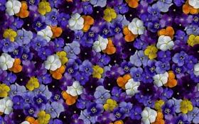 Обои цветы, цветные, flowers, color, фиалки, violet