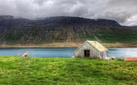Картинка island, Nobody Needs Dramatic Sheep, north atlantic