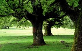 Обои природа, весна, зелень, парк