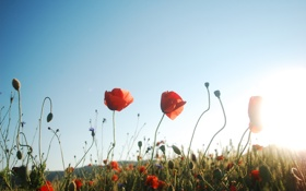 Картинка цветок, небо, макро, фокус, весна