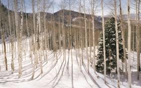 Обои зима, лес, снег, деревья, горы, Юта, США