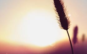 Обои пейзаж, закат, природа