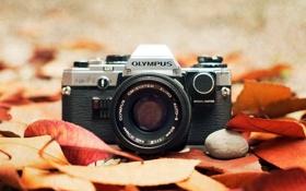 Картинка фотоаппарат, Olympus, макро