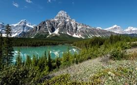 Обои лес, деревья, горы, озеро, Канада, Banff National Park, Банф