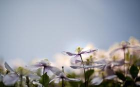 Обои цветы, сереневые, климатисы