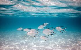 Обои свет, рыбки, Ocean