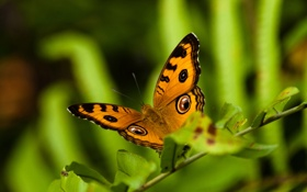 Обои глаза, рисунок, крылья, ветка, смотрят, бабочька