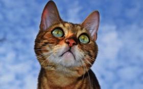 Картинка глаза, морда, кошка, взгляд, усы