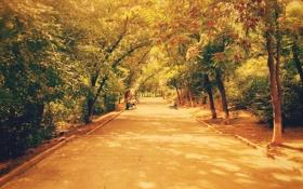 Обои осень, деревья, парк, trees, park, autumn, live