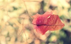 Картинка красный, лист, листок, ветка