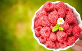Картинка цветок, ягоды, малина