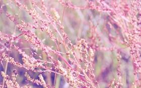 Обои розовое, макро, нежность