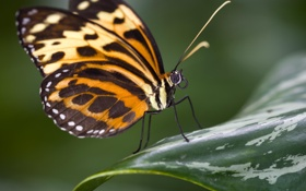 Картинка макро, природа, бабочка, насекомое