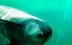 Обои природа, море, дельфин