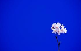 Картинка небо, цветы, дерево, ветка, сад