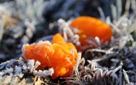 Картинка холод, иней, природа, гриб, кристаллы, Fungi, Фунги
