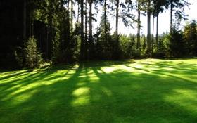Обои зелень, трава, солнце, газон, поляна, лужайка, площадка