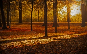 Обои осень, лес, листья, лучи, свет, деревья, природа