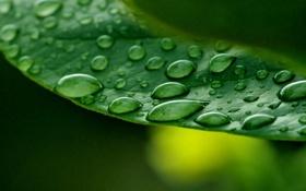 Картинка листья, вода, капли, макро, зеленый, роса, фон
