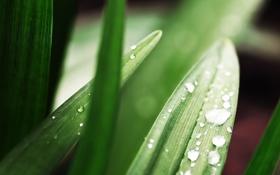 Обои капли, фото, роса, листья, обои, природа, растения