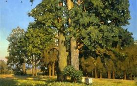 Обои лес, лето, деревья, пейзаж, картина, опушка, дубы
