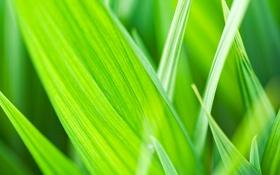Обои трава, макро, Природа