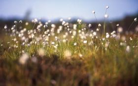 Картинка растения, трава, макро, цветы
