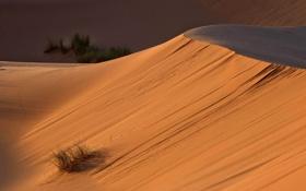 Обои растительность, пустыня, дюны