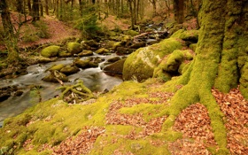 Обои осень, лес, ручей, камни, мох