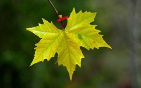 Обои листья, макро, ветки, природа, листва, листок, ветка