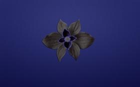 Обои цветок, растение, синий фон