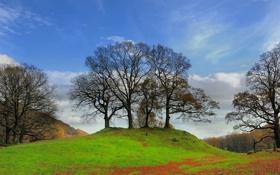 Картинка лес, осень, трава, небо, облака, листья, деревья