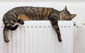 Картинка кот, животное, лежит, отдыхает, греется, батарея