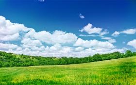 Обои деревья, природа, пейзажи, поле, небо, облока