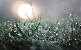 Обои трава, солнце, роса