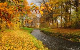 Картинка осень, лес, листья, деревья, река, ручей