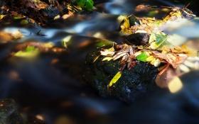 Картинка листья, камни, осень, река, поток, вода