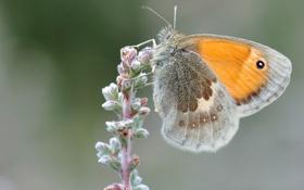 Картинка цветок, бабочка, растение, крылья, стебель, мотылек