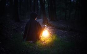 Обои лес, свет, ночь, человек, фонарь