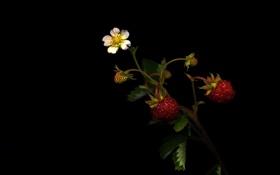 Картинка листья, цветок, клубника, растение, тень, земляника, свет